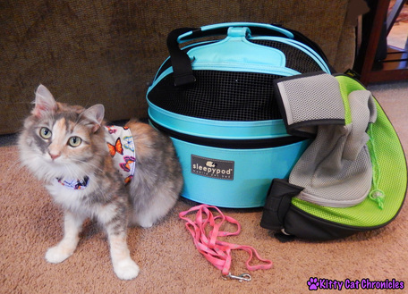 Traveling with a Cat - Sophie's Transportation