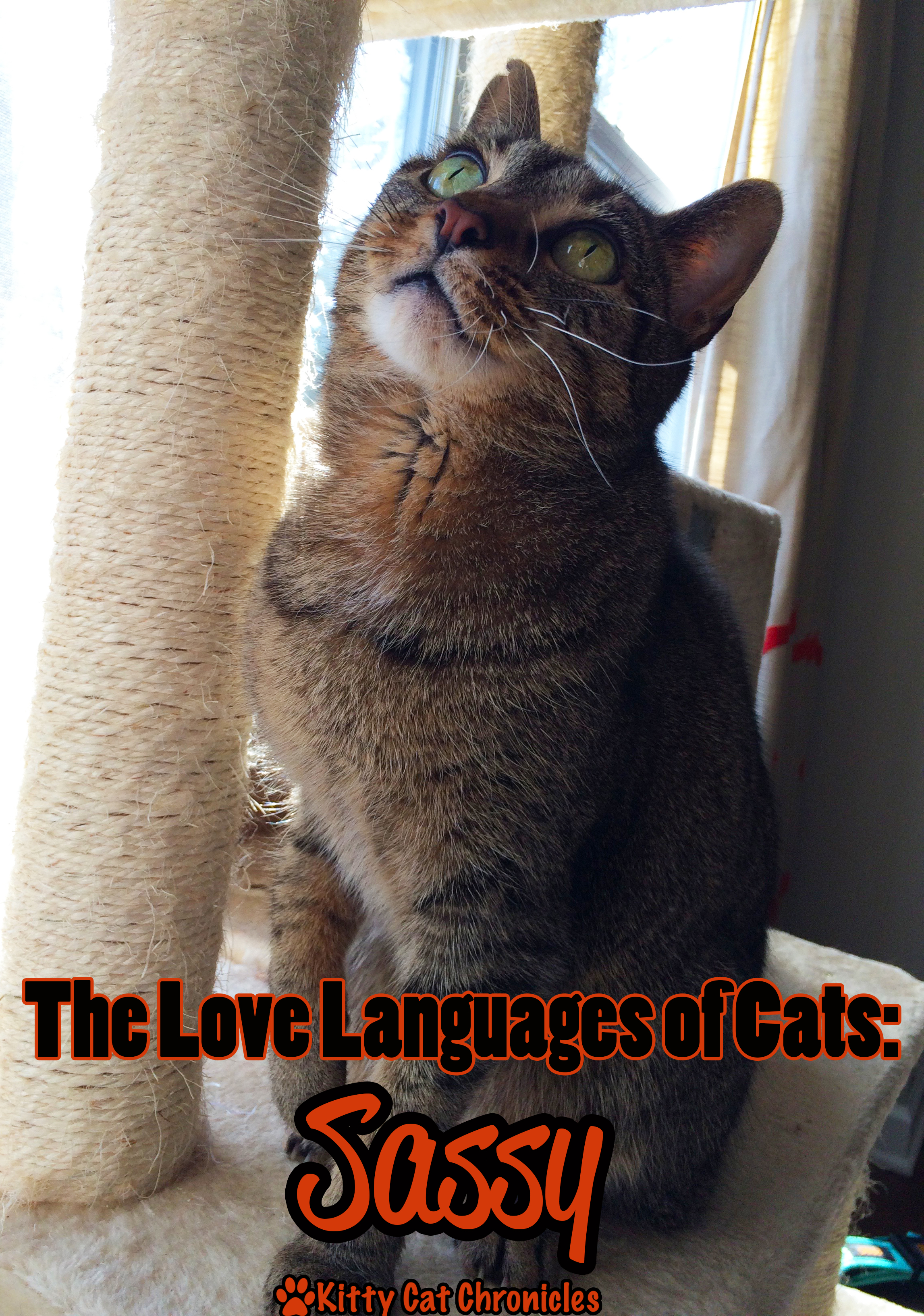 The Love Languages of Cats: Sassy