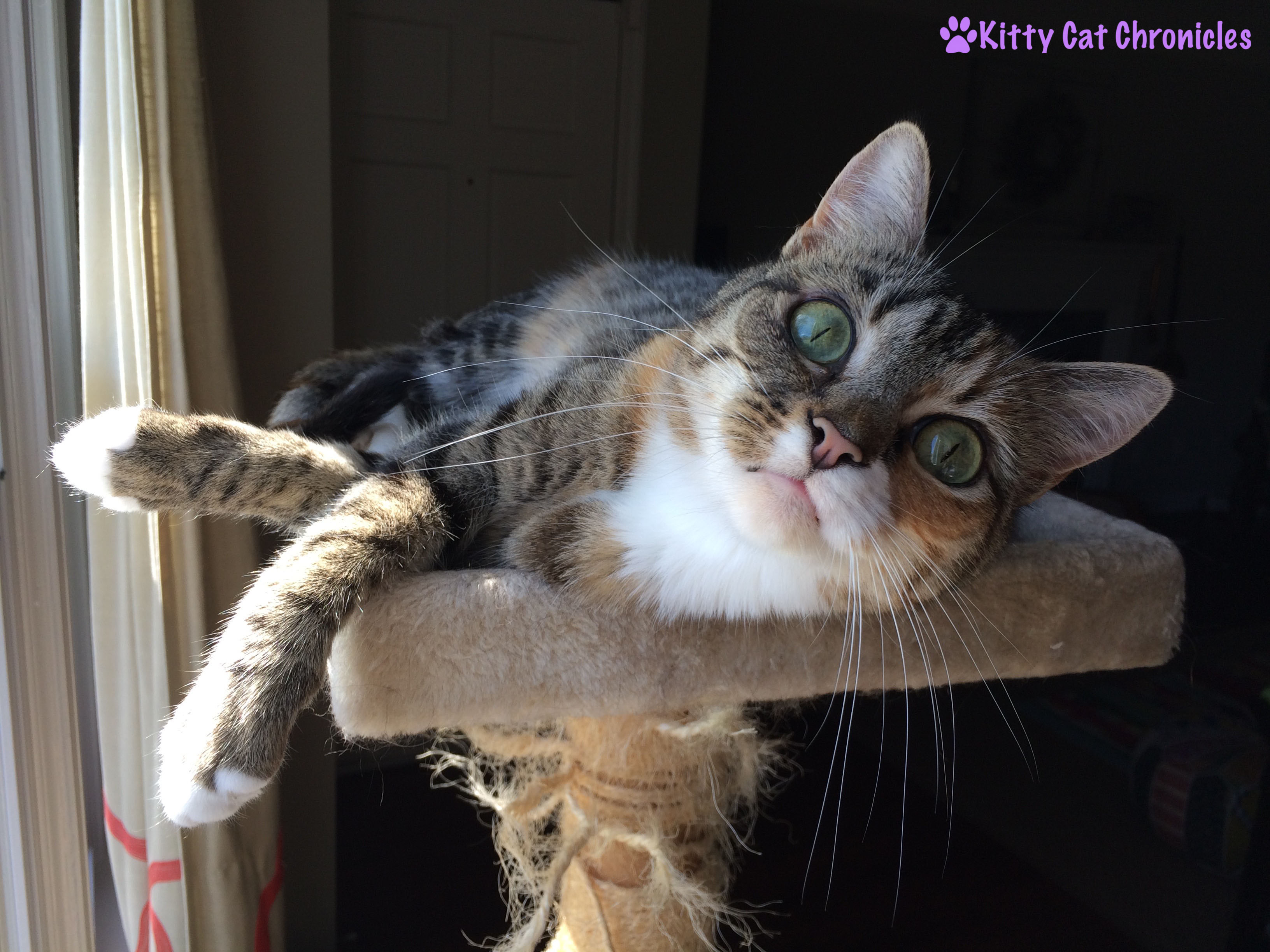 Flirting with Delilah: Cat on a Cat Tree