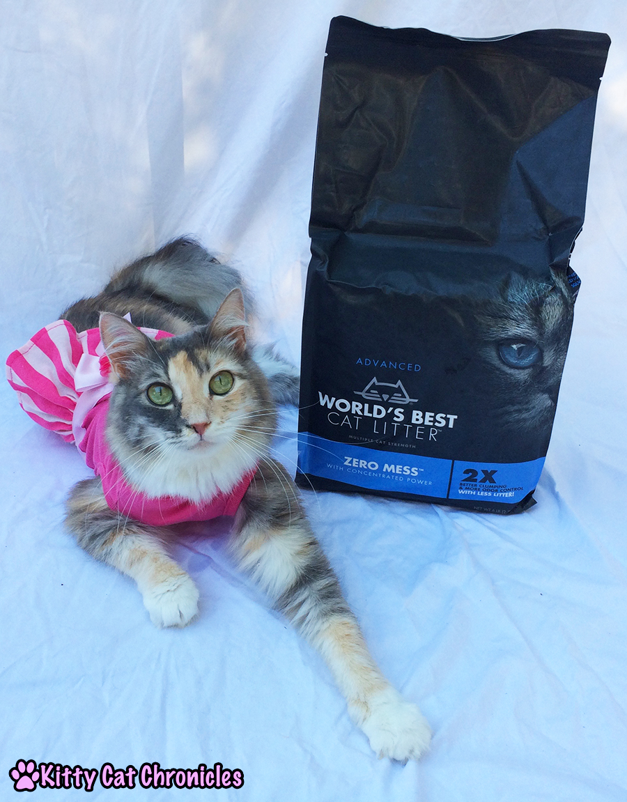 "Say ""Goodbye"" to Mess and ""Hello"" to World's Best Cat Litter - Sophie"