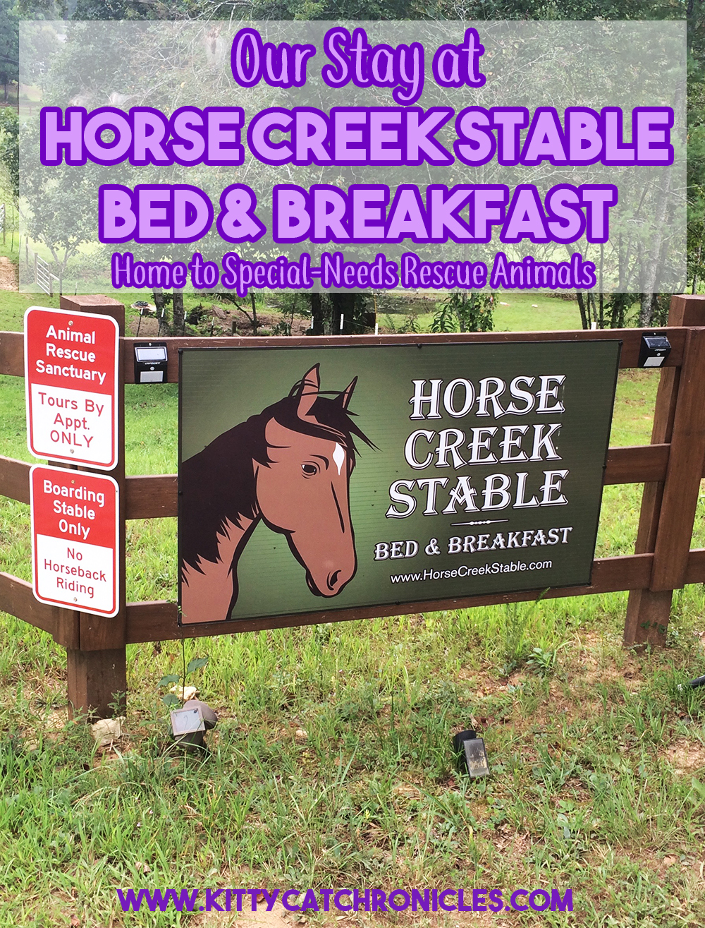 Our Stay at Horse Creek Stable Bed & Breakfast of Blue Ridge, GA