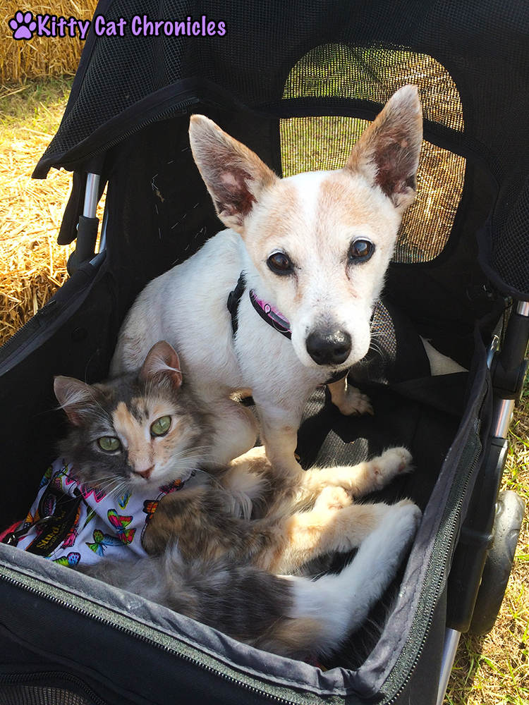 The KCC Adventure Team Celebrates Fall at Lane Southern Orchards - Sophie and Lucy in the Stroller Together