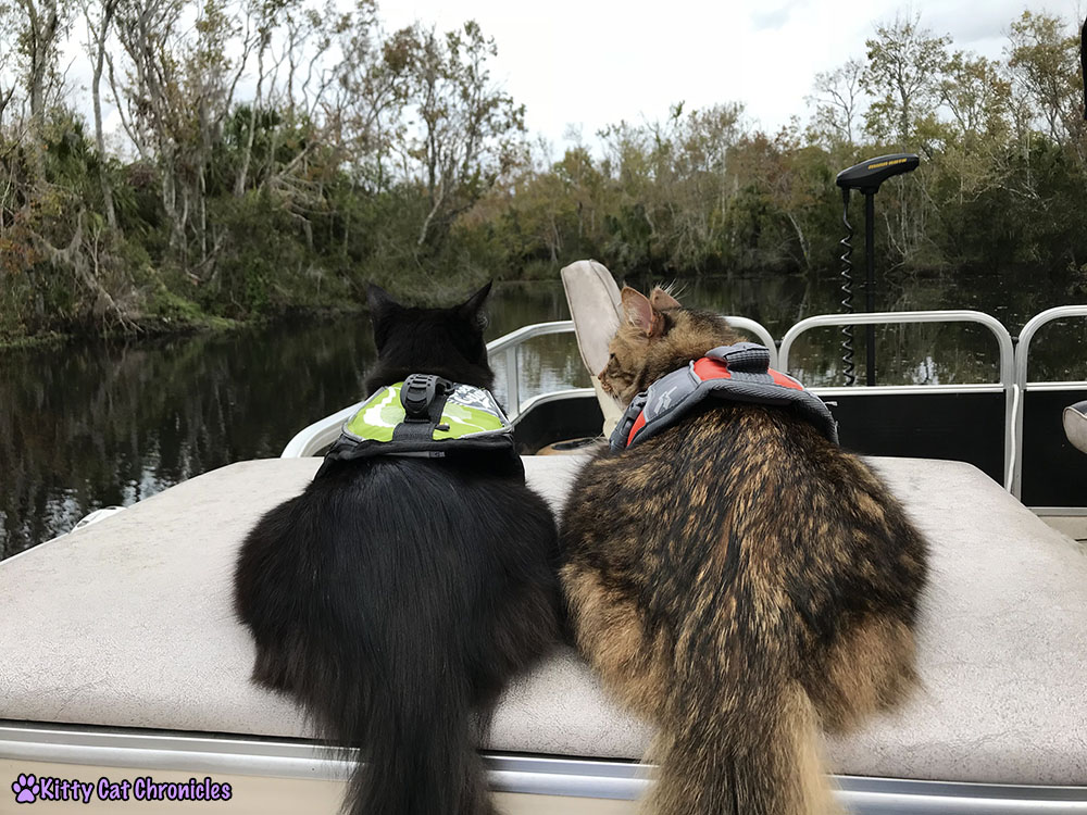The KCC Adventure Team Tours the St. John's River - Kylo Ren and Caster, cats on a boat