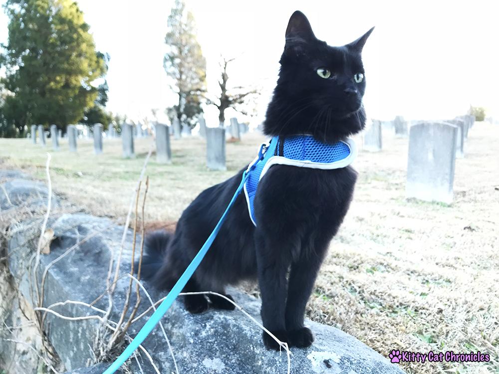 Kylo Ren Adventure Cat